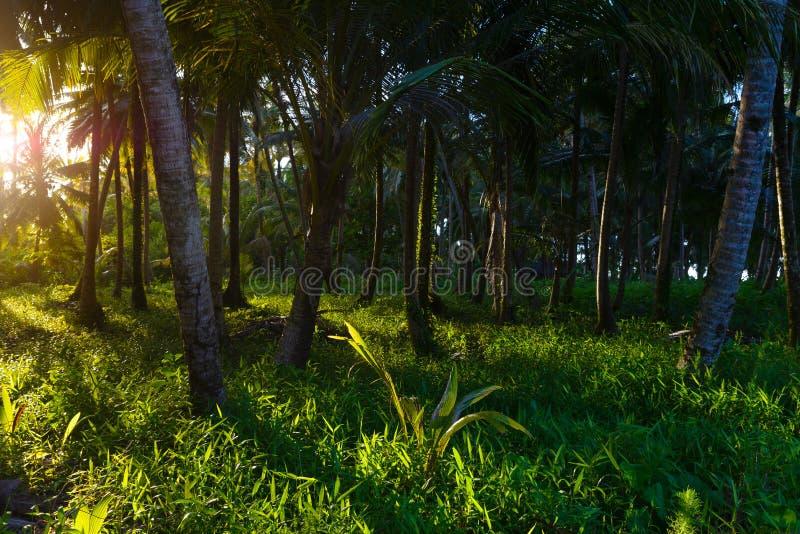Frodig grön tropisk skog, sunburst i palmträdskogsmark på öde ö, Sumatra, Indonesien Inspirerande natur, romantiker royaltyfria foton