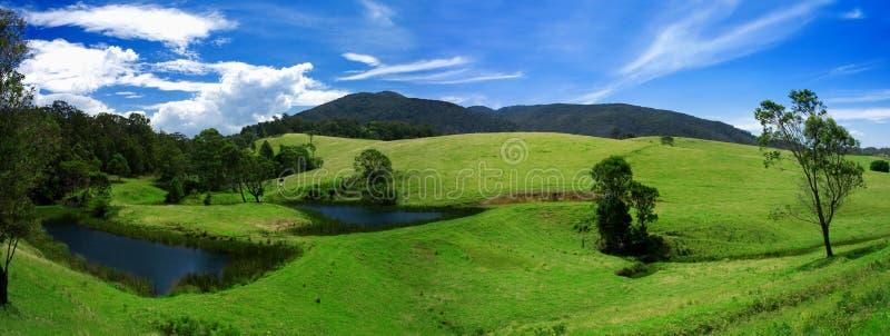 frodig panorama för fält royaltyfri foto
