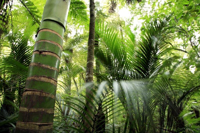 frodig skog royaltyfria foton