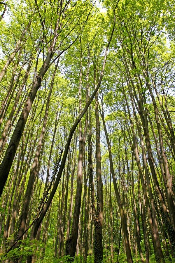 frodig skog royaltyfri foto