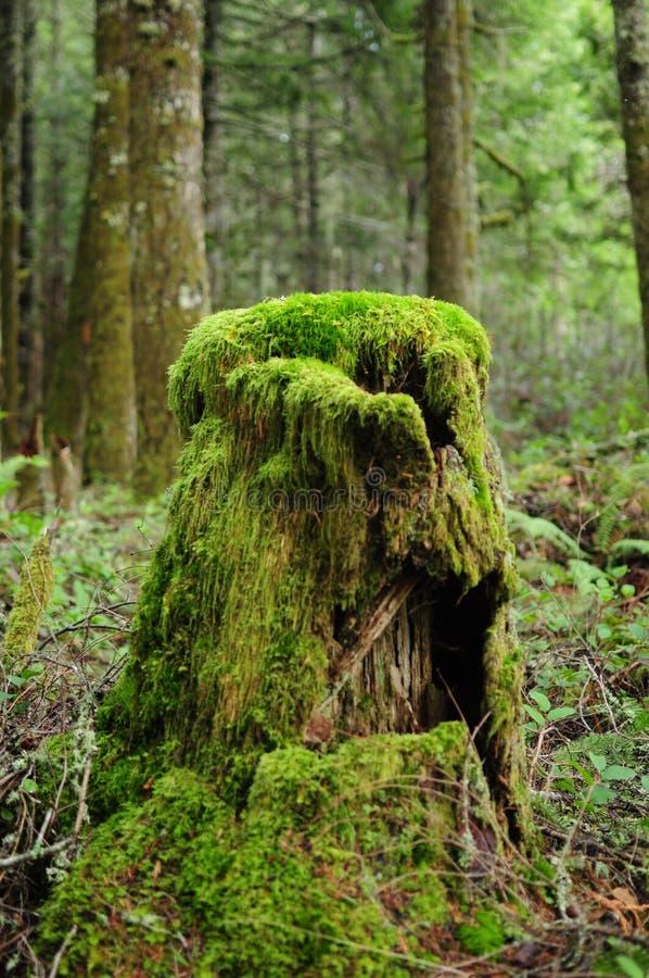 Frodig skog för mossig stubbe royaltyfria bilder