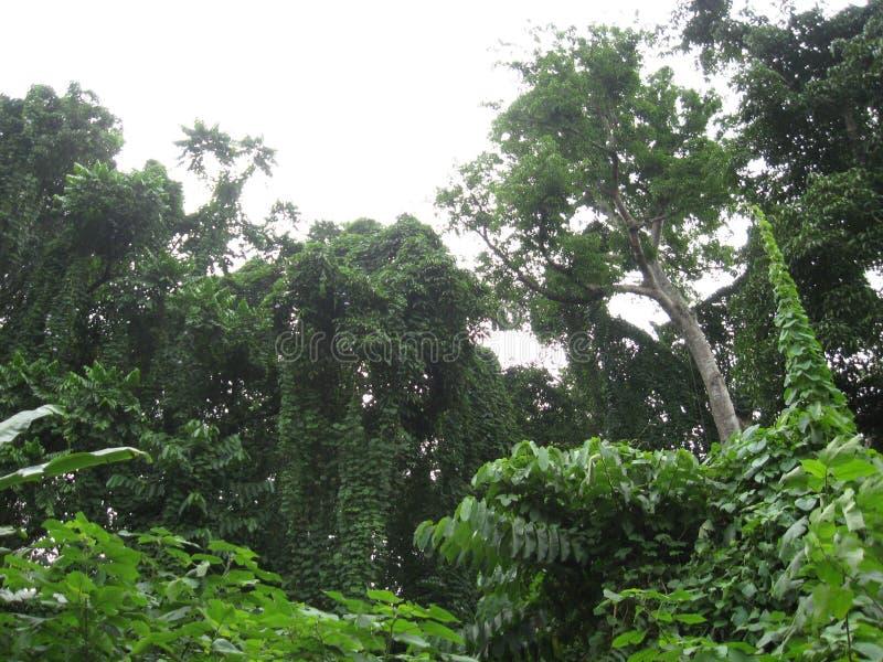 Frodig skog nära Los Banos, Filippinerna royaltyfria foton