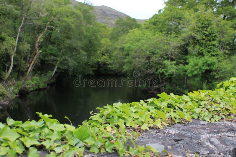 Frodiga Green River i den irländska bygden royaltyfri foto