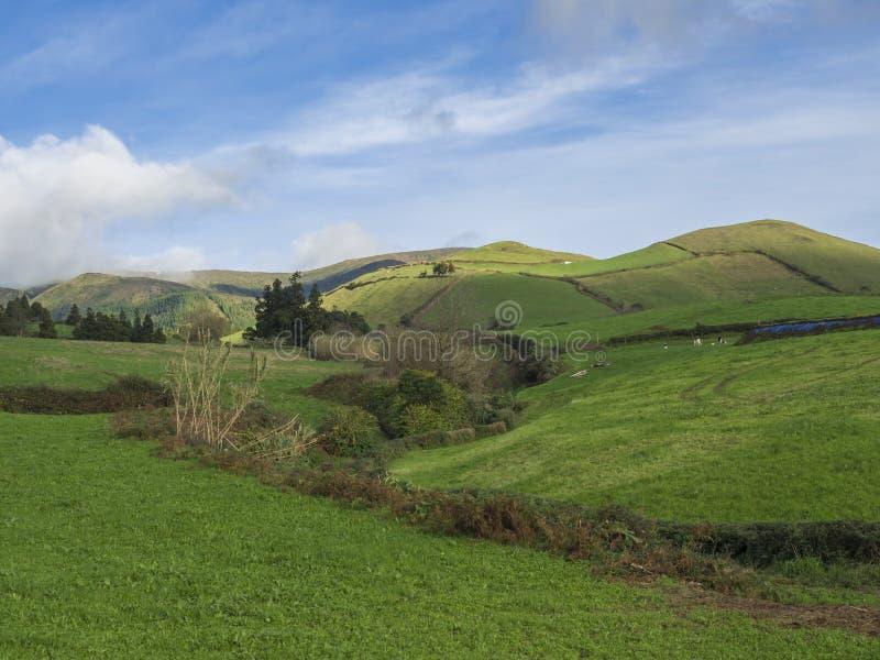 Frodiga kullar för grönt gräs med fält och betar, blå himmel och vita moln, typisk landskap av den SaoMiguel ön royaltyfri foto