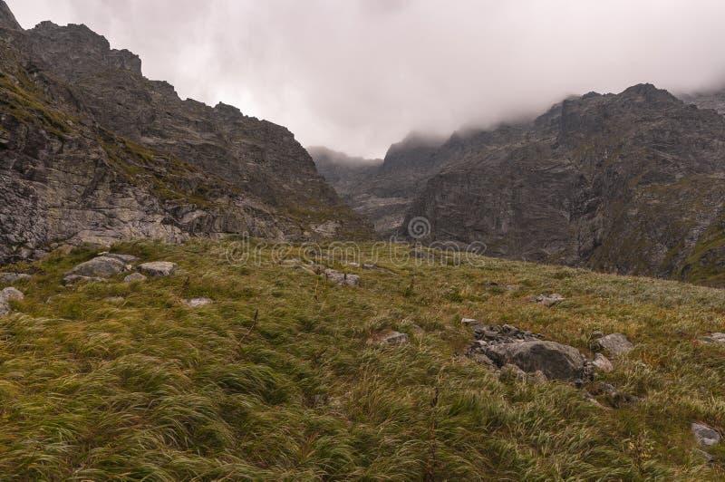 Frodigt gräs i de höga Tatra bergen i den starka vinden arkivbild