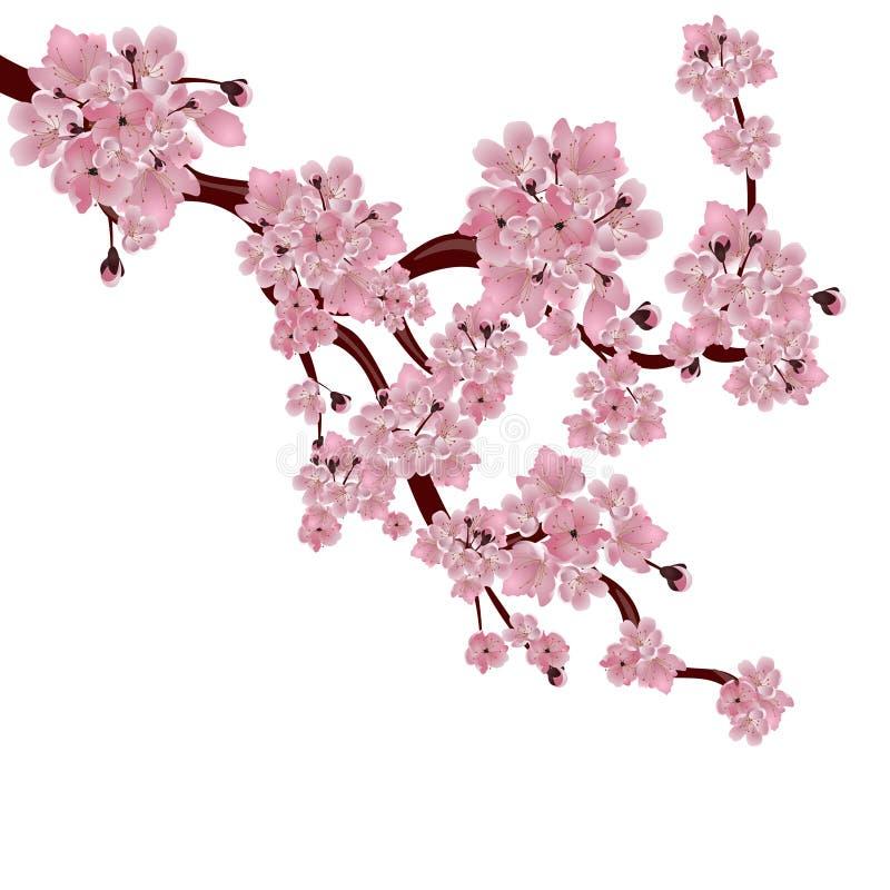 Frodigt japanskt körsbärsrött träd Filialen av den rosa sakura blomningen royaltyfri illustrationer