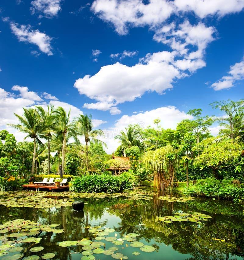 frodigt omgivet tropiskt för växter damm royaltyfria foton