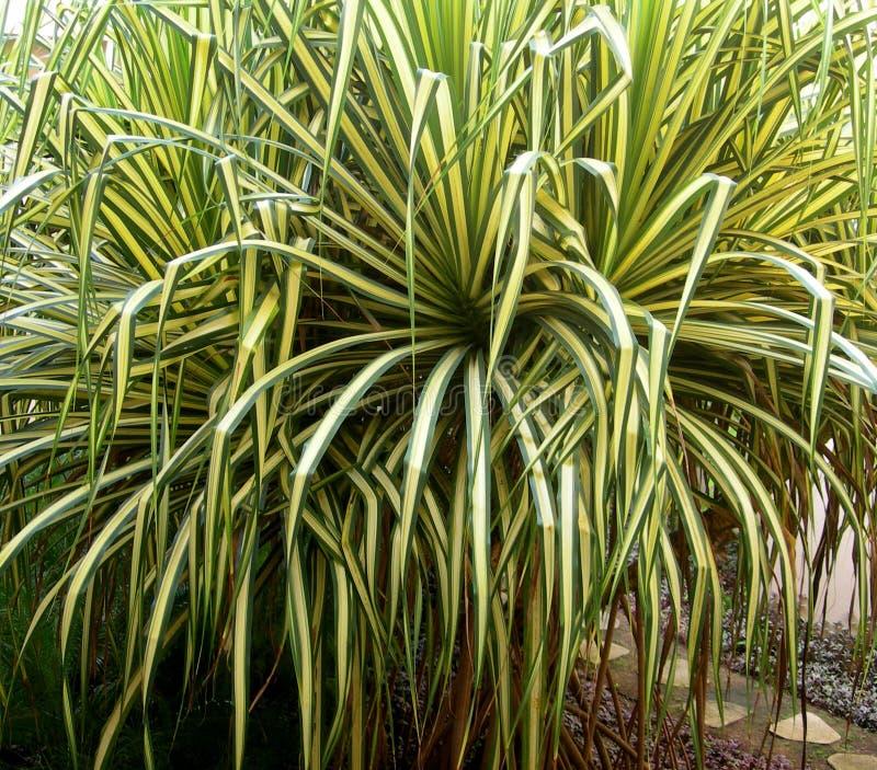 frodigt tropiskt för lövverk arkivbild