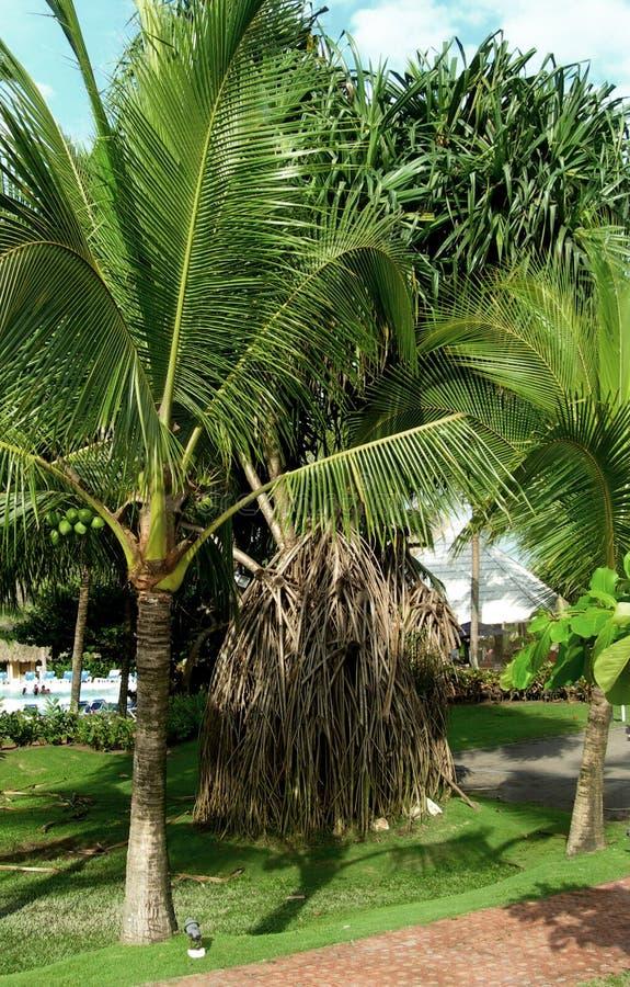 frodigt tropiskt för lövverk royaltyfri fotografi