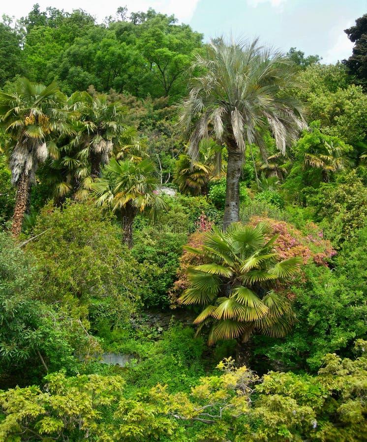 frodigt tropiskt för lövverk royaltyfria bilder