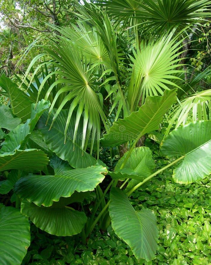 frodigt tropiskt för lövverkliggande royaltyfria bilder