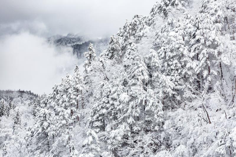 froest冬天的风景 库存照片