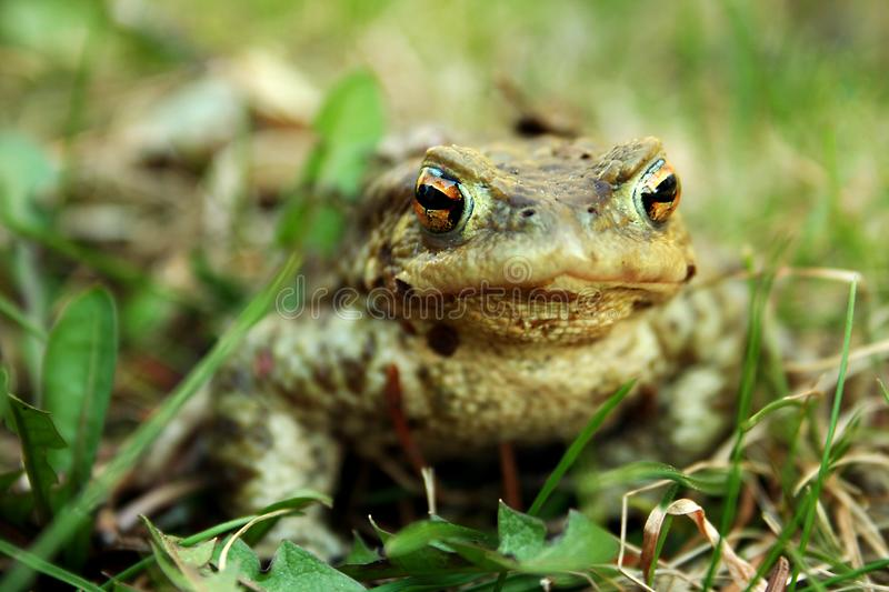 Download Frog stock image. Image of orange, toad, color, frog - 14232771