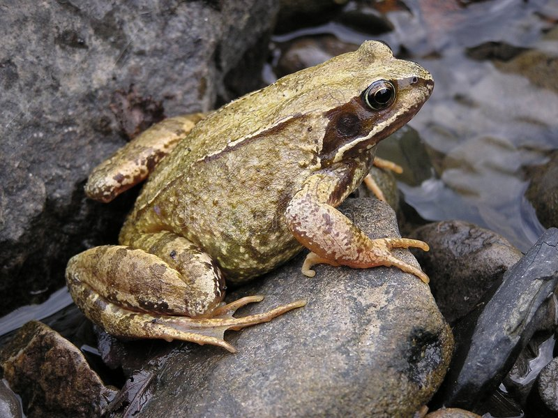 Download Frog Stock Image - Image: 190861