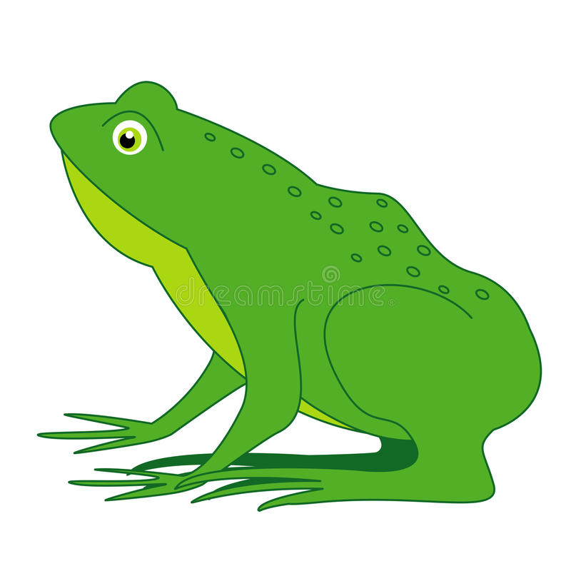 Free Frog Stock Images - 19549424