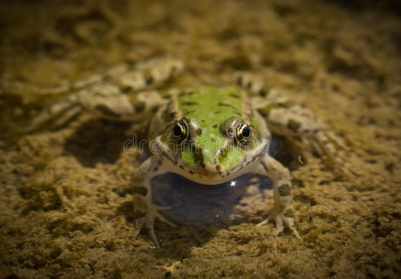 Download Frog stock image. Image of pretty, slimy, outdoors, natural - 20855673