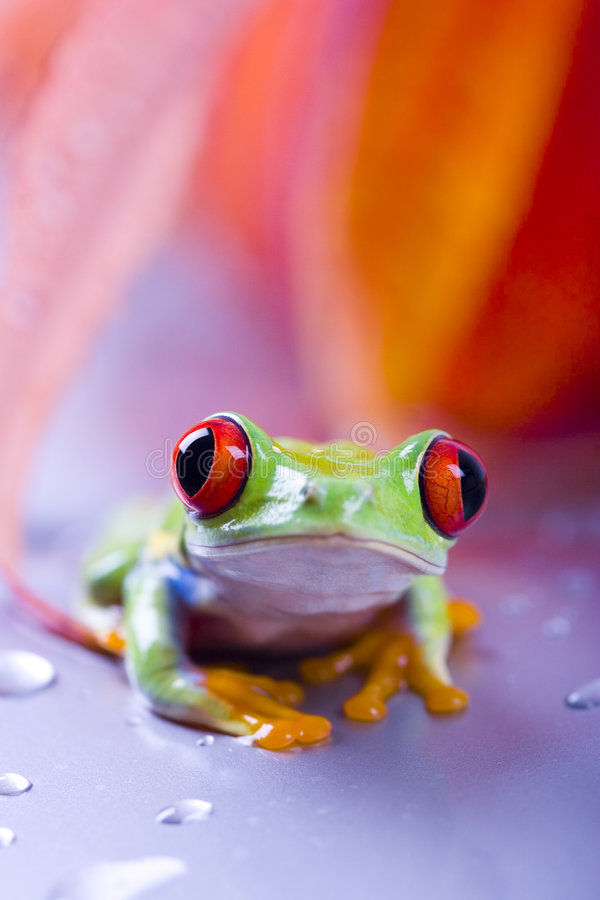 Download Frog stock photo. Image of bulging, convergent, colours - 2316526