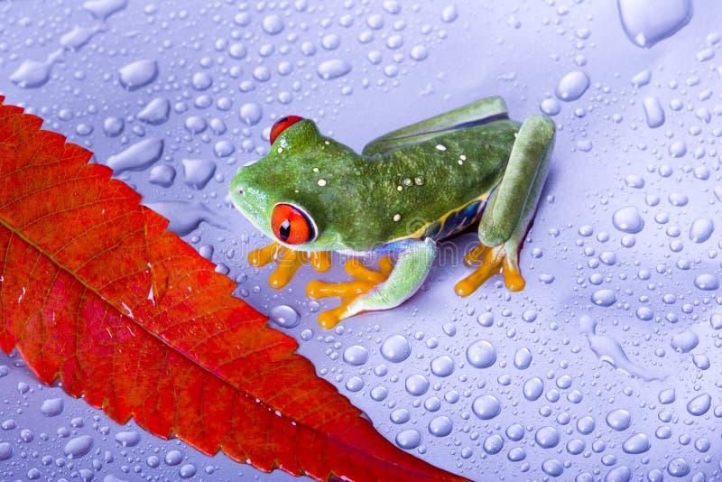 Download Frog stock photo. Image of nature, eyed, orange, over - 2316628
