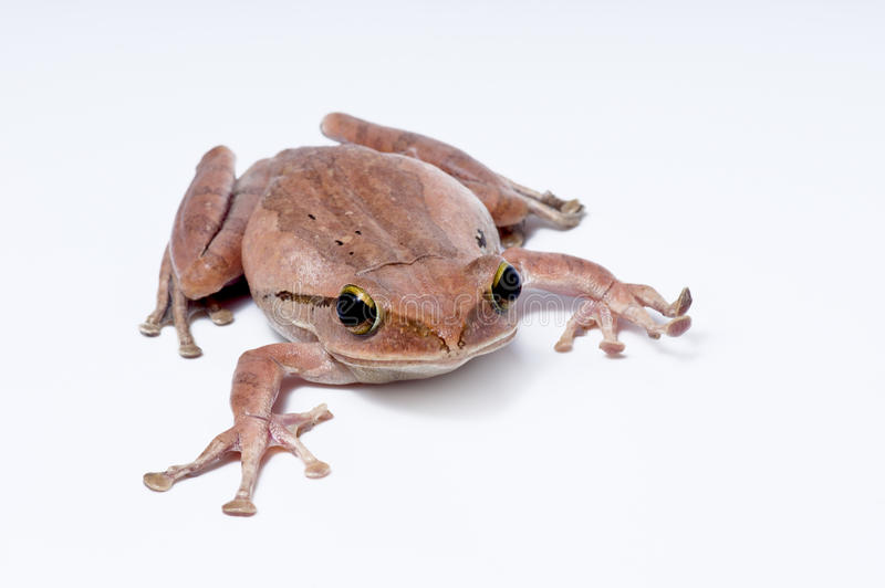 Download Frog stock photo. Image of look, feet, animal, environment - 23954074