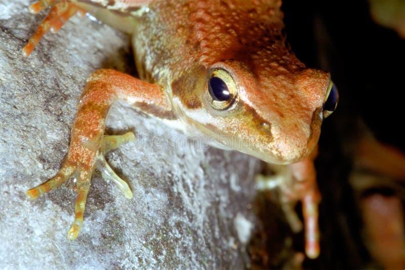 Download Frog stock image. Image of head, frog, animal, closeup - 25367161