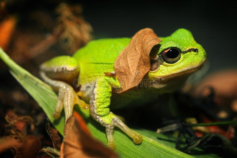 Download Frog stock image. Image of froggy, slimy, cold, staring - 25367965