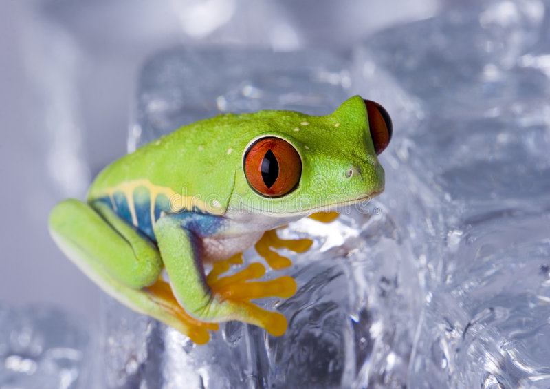 Download Frog stock image. Image of sitting, above, orange, large - 8235353