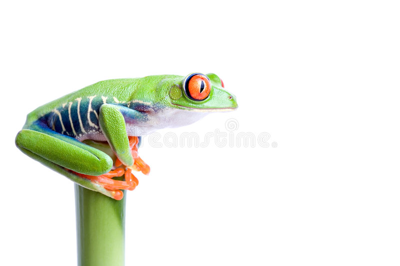 Frog on bamboo stock image
