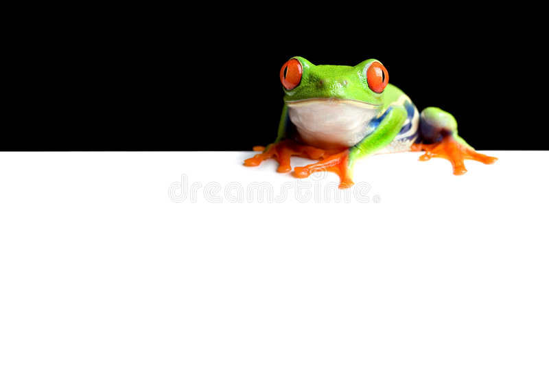 Frog border. Black background on white space for copy, easily edited for use as banner, display, etc. red-eyed tree frog (Agalychnis callidryas) macro royalty free stock photos