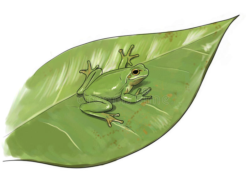 Frog camouflage vector illustration