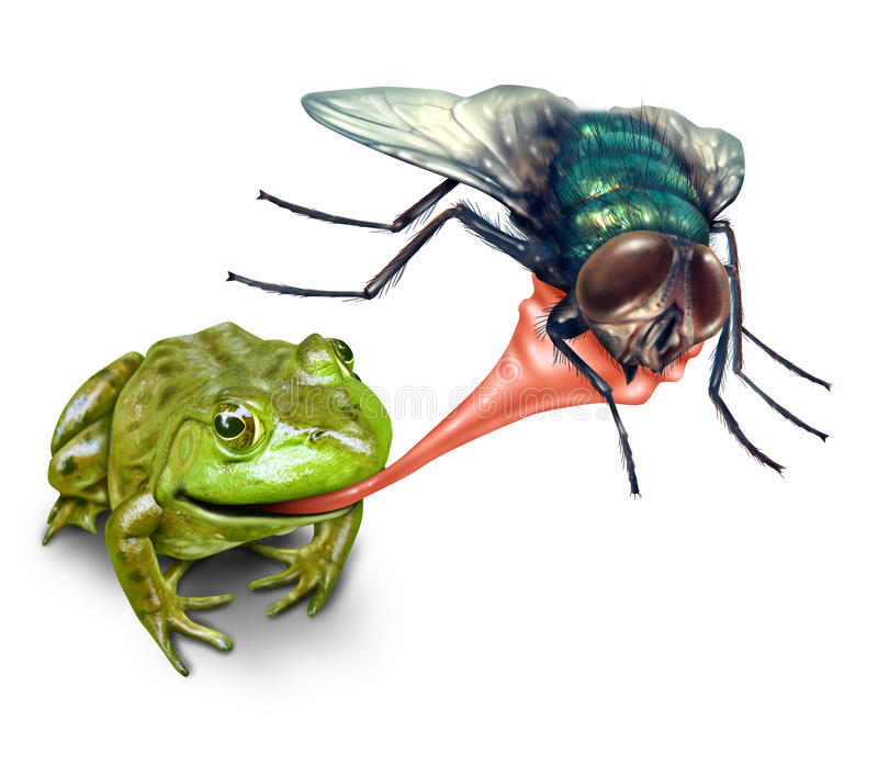 Frog Catching Bug vector illustration