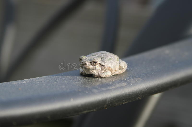 Frog on Chair royalty free stock photos