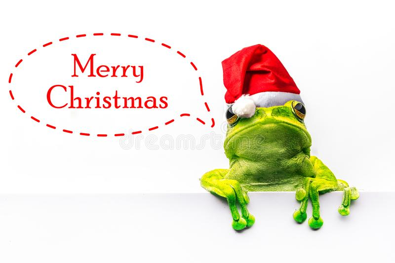 Frog with Christmas hat isolated on white background.  royalty free stock image