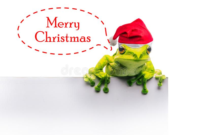 Frog with Christmas hat isolated on white background.  royalty free stock images