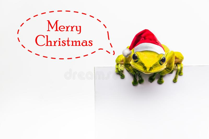 Frog with Christmas hat isolated on white background.  stock images