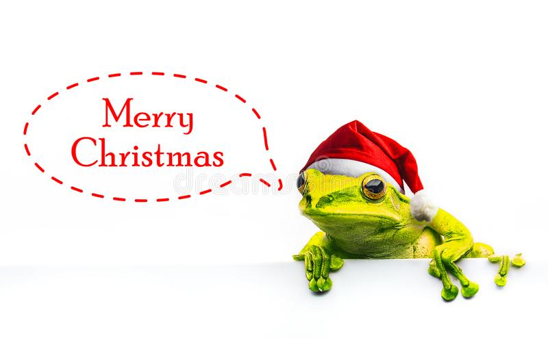 Frog with Christmas hat isolated on white background.  stock photos