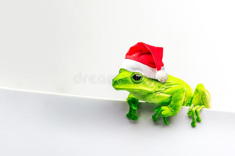 Frog with Christmas hat isolated on white background.  royalty free stock photo