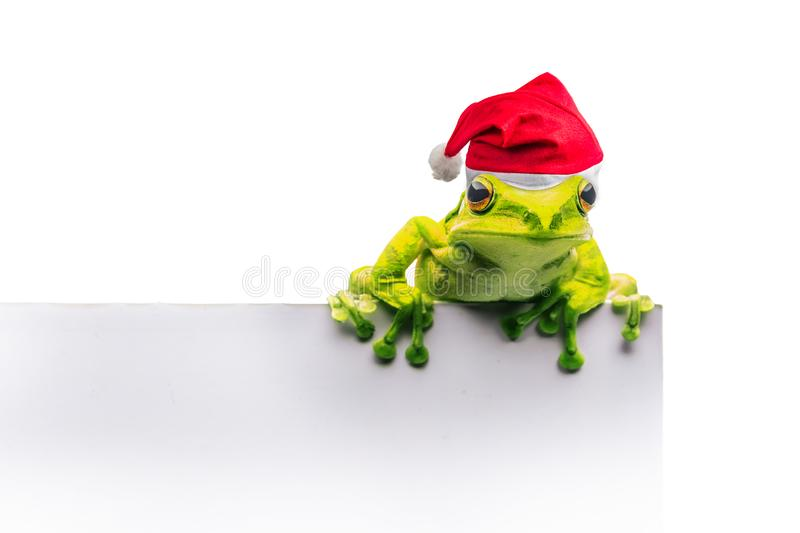 Frog with Christmas hat isolated on white background.  stock photography