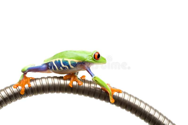 Frog climbing on tube isolated stock images