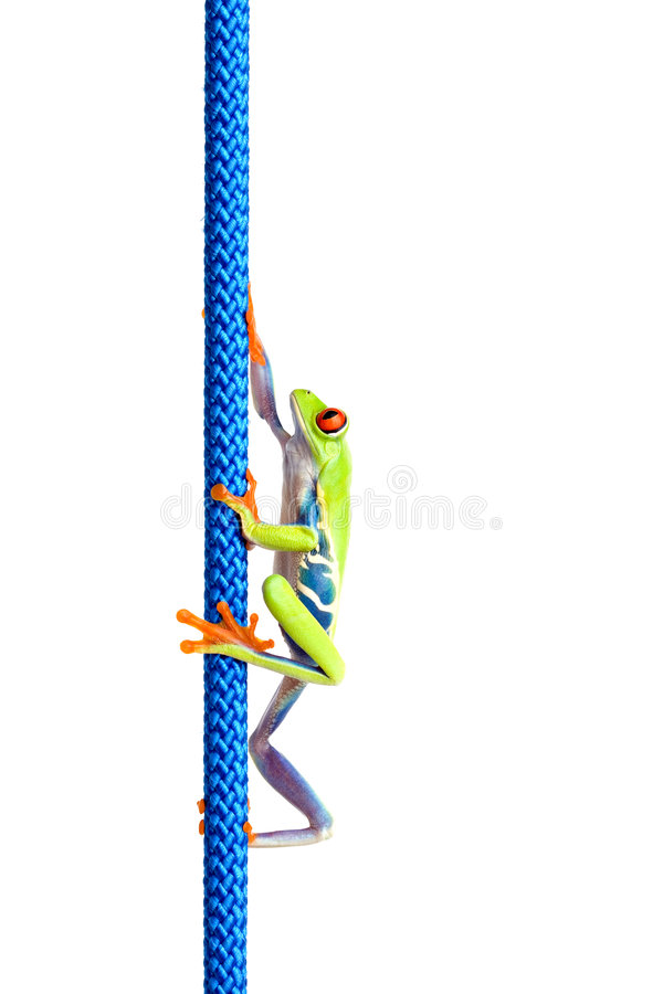 Frog climbing up rope isolated stock photo
