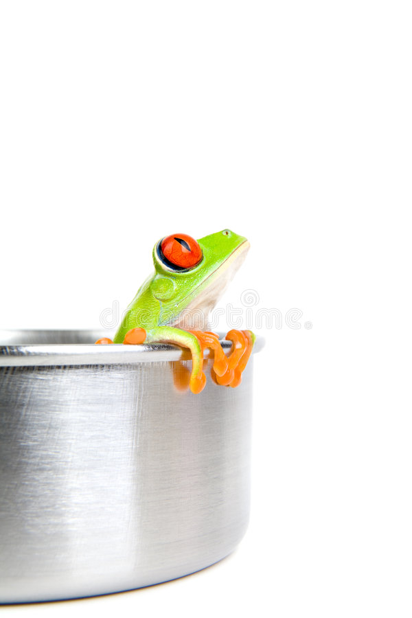 Download Frog On Cooking Pot Isolated Stock Photos - Image: 4840403