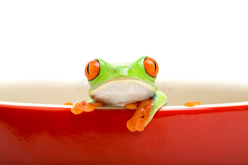 Frog in cooking pot isolated o stock images