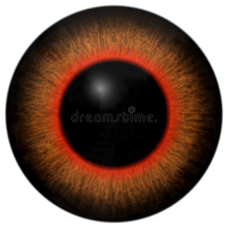 Frog 3d eyeball with orange and red round, big black pupil, on white background, animal eye.  royalty free illustration