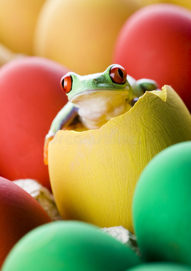Frog and eggs royalty free stock photos