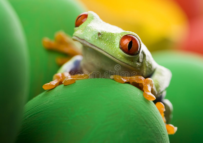 Frog and eggs stock photo