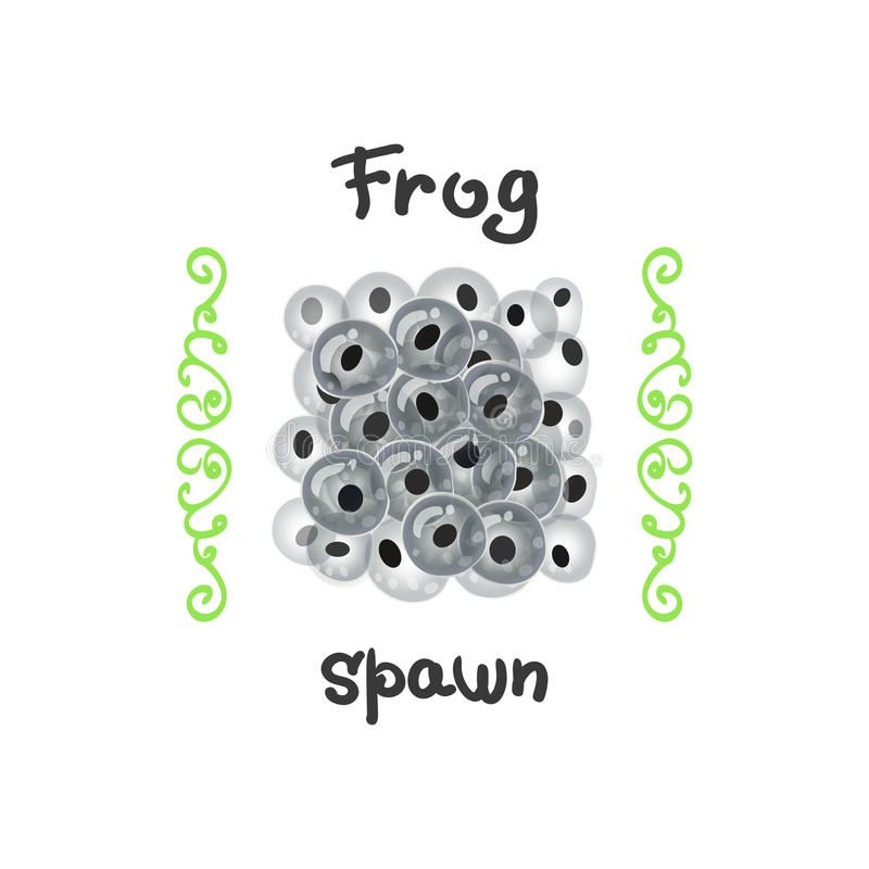 Frog eggs as a delicacy. Fertilized clutches, frog-spawn or of a large fish. The egg of a reptile, a delicacy illustration in .Breeding frogs occur in a stock illustration