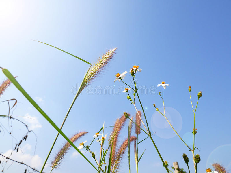 Frog eye view of grass and daisy under blue sky stock image