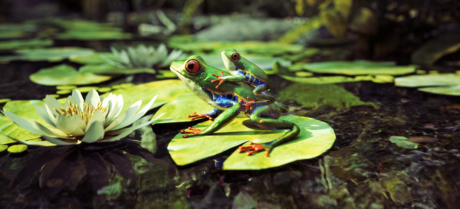 Frog family sitting on a lily pad with baby on back. Leadership, protection, security , family concept. stock images