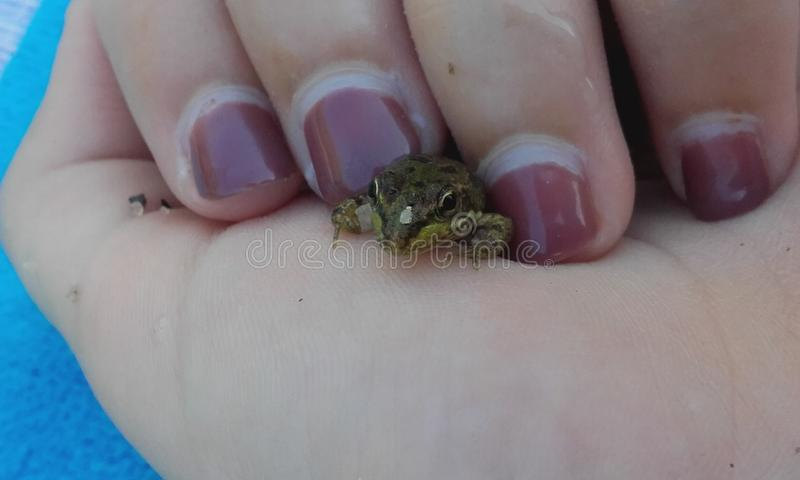 Frog between fingers royalty free stock photos