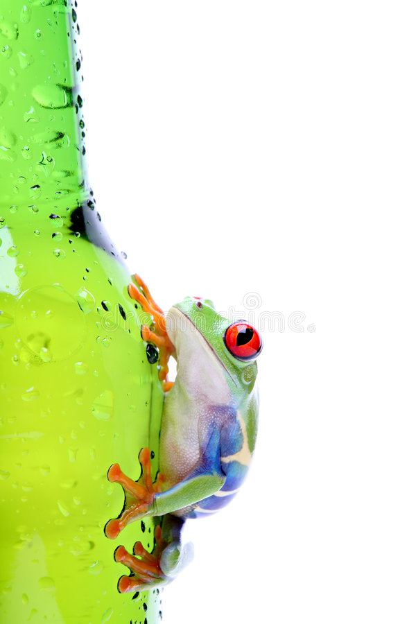 Frog on glass isolated white stock photos