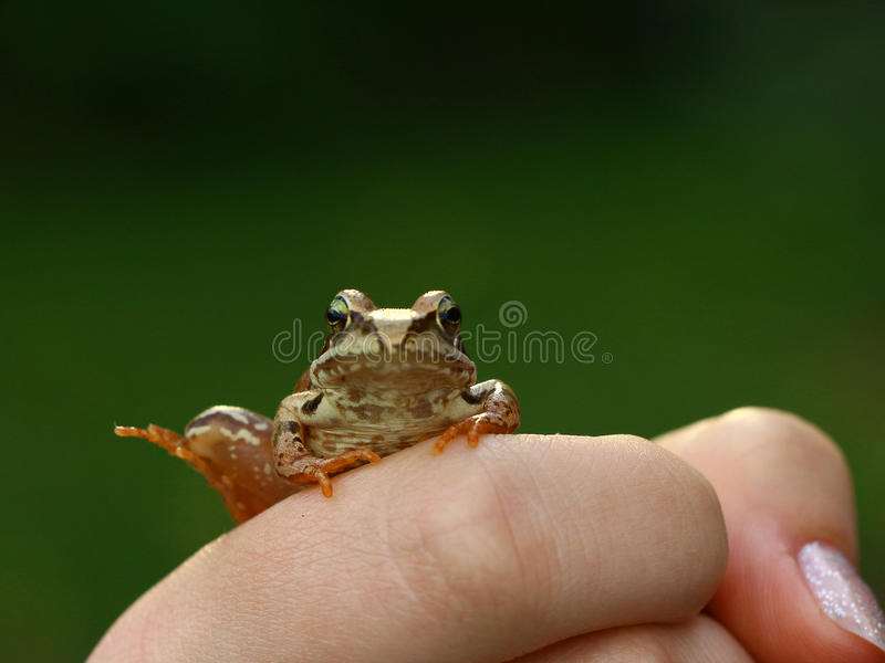 Frog on the hand royalty free stock photos